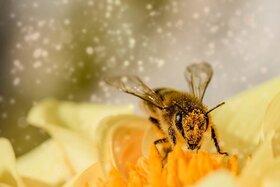 Bild: Zingst summt - Entdecke die Welt der Bienen