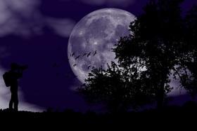 Bild: ... stiller Gefährte der Nacht ... - Eine Mondscheinserenade