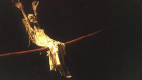 Bild: Maria auf dem Seil