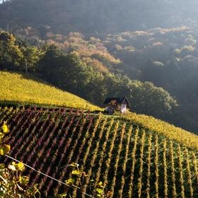 Bild: Offenburger Weinspaziergänge Rammersweier - Rundweg Rammersweier