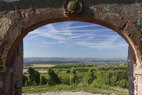 Bild: Hinter die Mauer geschaut! - 2 –stündige Weinbergswanderung durch den altehrwürdigen Steinberg