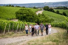 Bild: Über Stock & Wein -Zwischen Steinkopf und Domäne Bergstraße