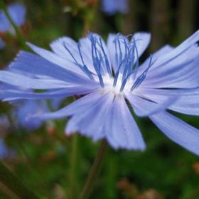 Bild: Wildpflanzen-Zauber