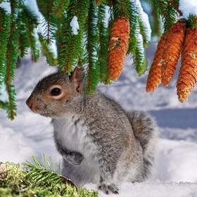 Bild: Tannengrün und Schneeweiss! - Winter- und Weihnachtsmärchen
