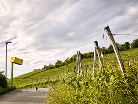 Bild: Rehberger Weg - Führung mit Weinprobe von Susi Engler