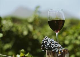 Bild: Weinmesse Metropolregion Montpellier