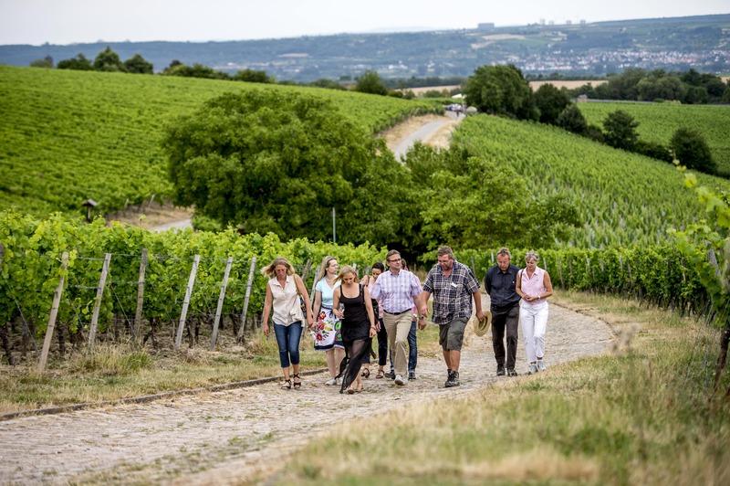 Über Stock & Wein -Zwischen Steinkopf und Domäne Bergstraße