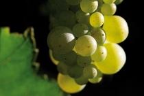 Bild: F�rderverein thalhaus e.V. Weinprobe - Grosse Weinprobe - Heimische Weine, speziell kredenzt