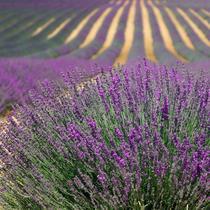 Bild: Die Welt im Sucher: Provence - Visuelles Konzert