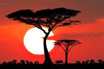 Bild: Sehnsucht Afrika