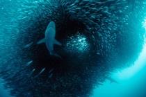 """Bild: PLANETVIEW - Lichtbildshow """"Abenteuer Ozean"""""""