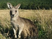 """Bild: PLANETVIEW - Lichtbildshow """"Australien"""""""
