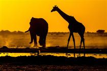 Bild: Afrika - Unterwegs im S�den