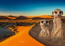 Bild: Namibia & Botswana - Tierisch gut