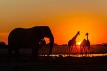 "Bild: AFRIKA – Unterwegs im wilden Süden ""Namibia – Botswana – Südafrika – Swasiland – Lesotho – Vic Falls"""