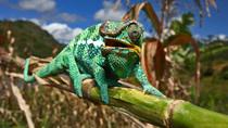 Bild: Madagaskar – Insel der Urzeit