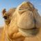 Bild: Oman