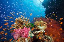 Bild: Abenteuer Ozean - Geheimnisse der Weltmeere - Multivision mit David Hettich