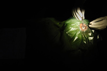 Bild: Three Tales - Video-Oper von Beryl Korot und Steve Reich