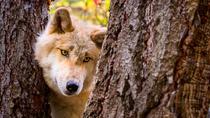 Bild: Sehnsucht Wildnis - Quer durch Kanada und Alaska - mit Mario Goldstein
